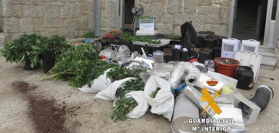 La Guardia Civil desarticula una importante plantación de 'maría'