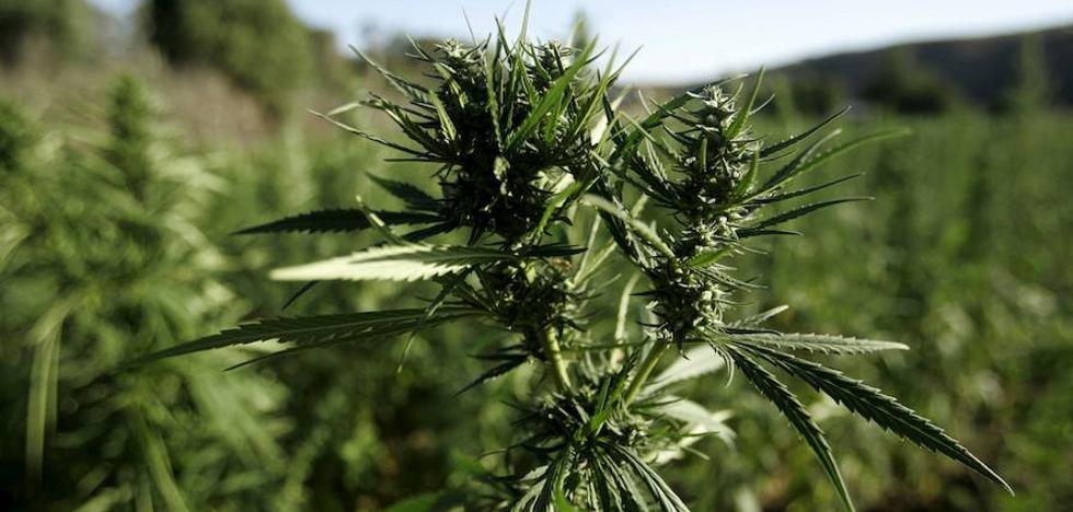 29 kilos de marihuana en un pedido de Amazon
