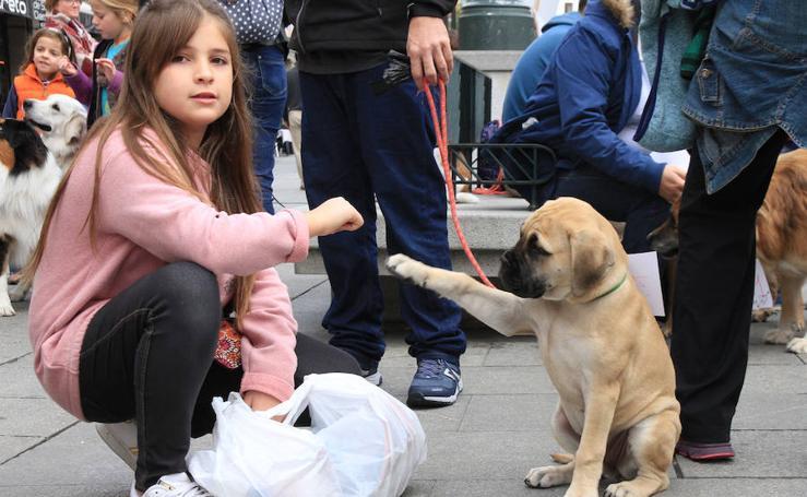 Segovia celebra el Día Mundial de los Animales