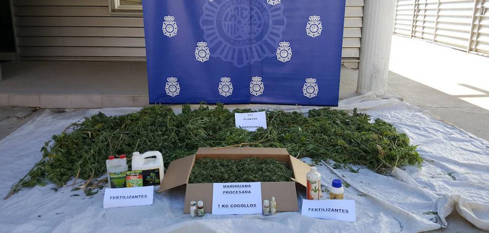 Dos detenidos por cultivar 113 plantas de marihuana en Valladolid capital