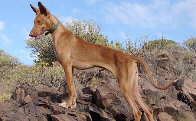 Un 30% de los perros abandonados en la provincia son de caza