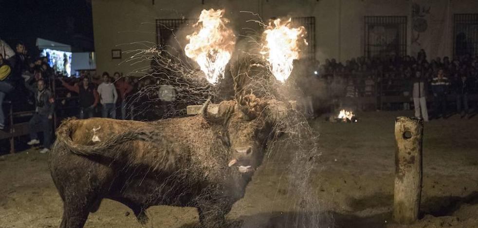 Medinaceli se prepara para la celebración del Toro Jubilo el próximo sábado