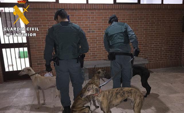 La Guardia Civil realiza nuevas detenciones por furtivismo en la comarca de Arévalo