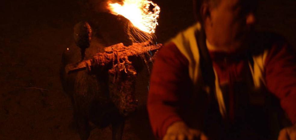 Los animalistas piden a la Junta que sea «valiente» y suspenda el Toro Jubilo de Medinaceli