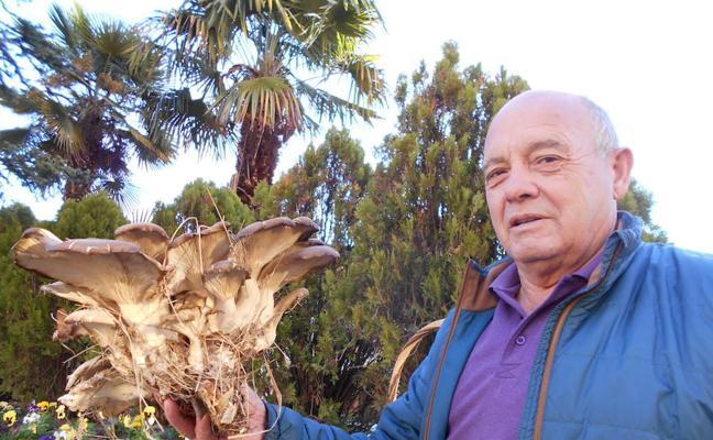 Un 'setón' de cuatro kilos en Rioseco