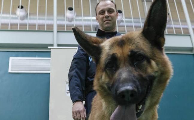 Un proyecto piloto ofrece el apoyo a la víctima de violencia a través de un perro