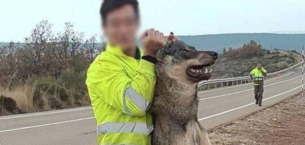 Suárez-Quiñones pide que se aclare cómo murió el lobo fotografiado en Palencia