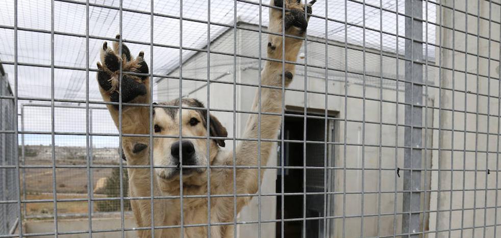 La protectora de Palencia, 'Scooby' se niega a sacrificar animales pese a la masificación