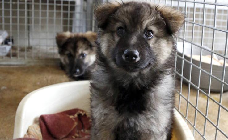 Centro de protección de animales 'Scooby' en Palencia