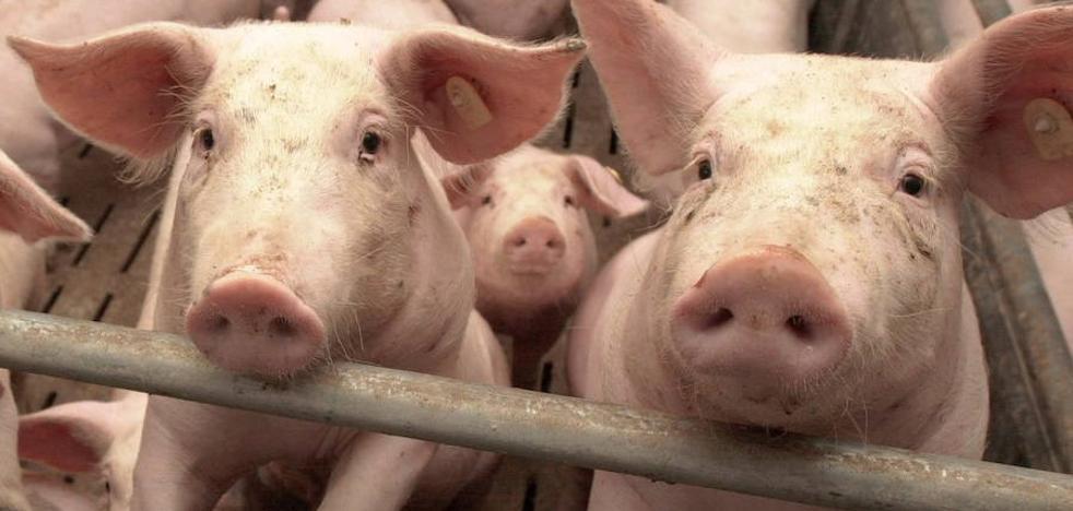 Vecinos de Cerecinos de Campos inician una recogida de firmas contra una macrogranja de porcino