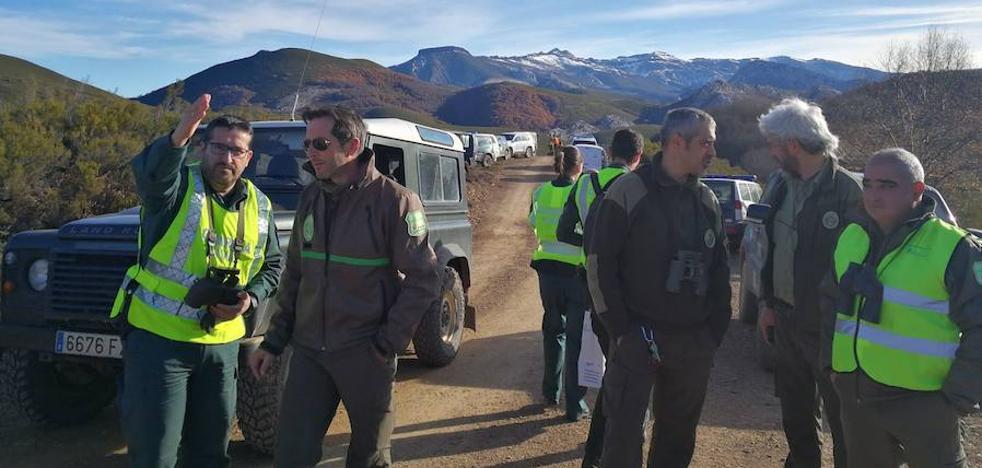 La Fundación Oso Pardo se personará en el caso del oso disparado en Palencia