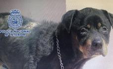 Detenida por tener encerrada en la terraza desde hace años a su perra, desnutrida y enferma