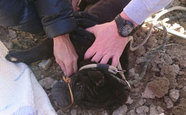 Rescatan a un shar pei de la muerte en una acequia de Palencia