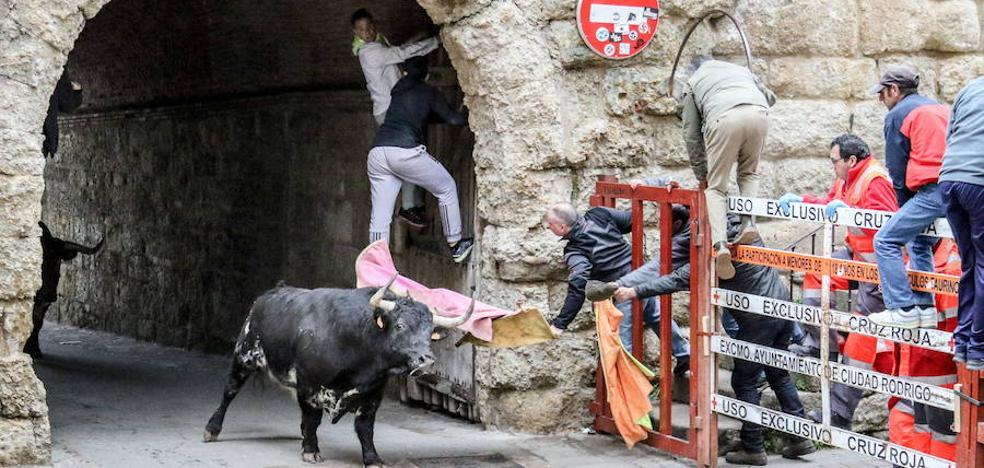 El encierro a caballo será con toros de Sergio Galán y el del Aguardiente ya tiene donantes