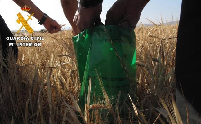 25 investigados en Ávila por actividades irregulares en el ámbito cerealista