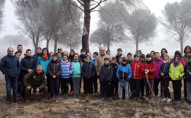 La Junta reforesta 76 hectáreas del pinar quemado en Nava en primavera