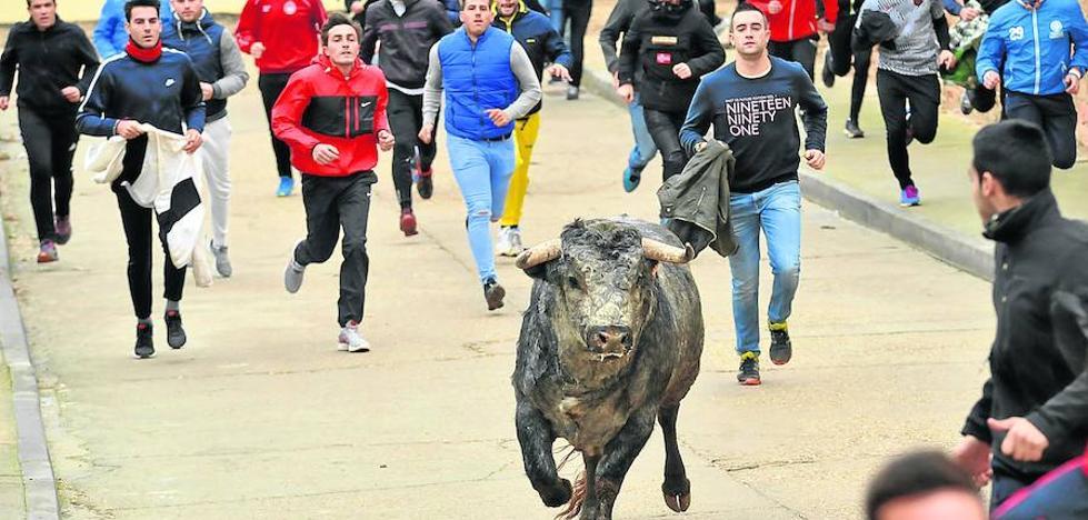 Los pueblos apuestan de nuevo por los toros con más de 700 festejos en 2017