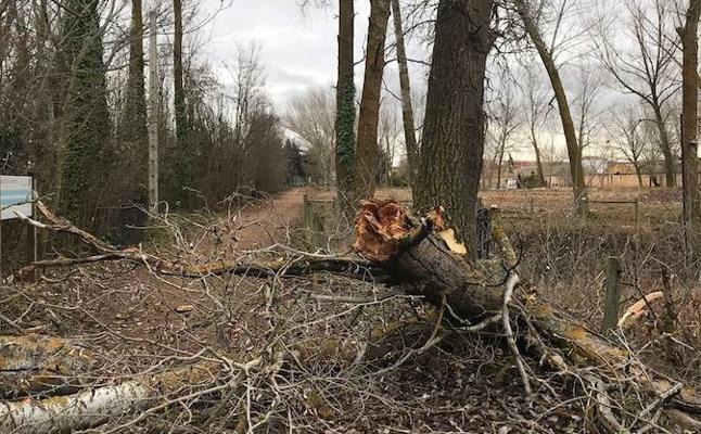 El viento arranca las ramas de los árboles del Canal de Castilla