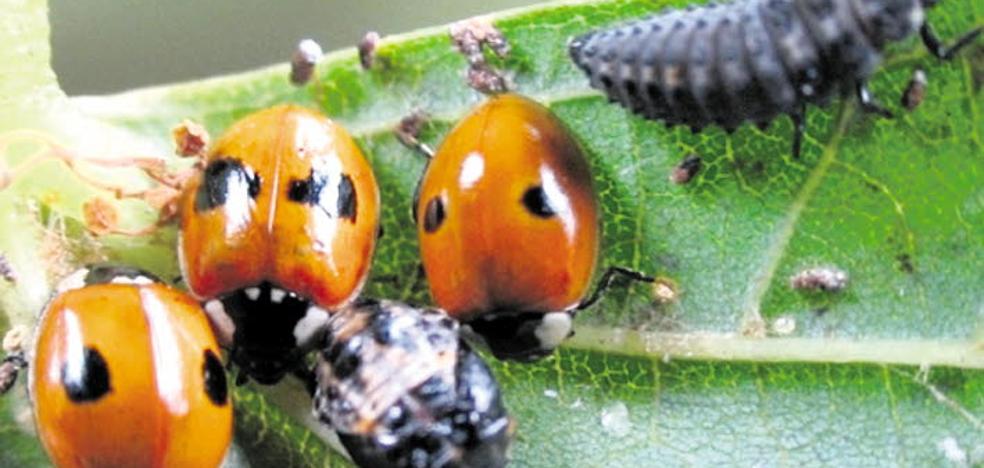 'Hoteles de insectos' en Traspinedo