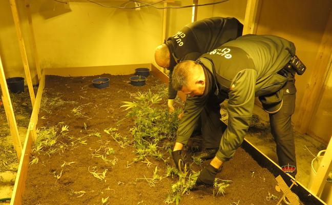 La Guardia Civil descubre una plantación de marihuana en el interior de una nave en VIllares