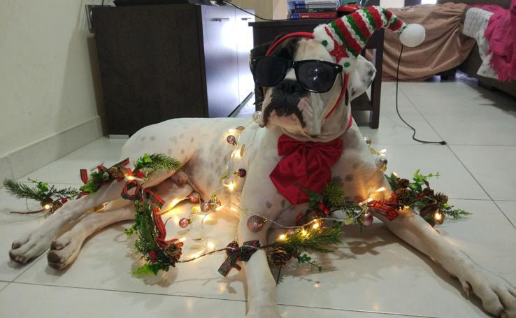 Así es la decoración navideña de los lectores de El Norte de Castilla