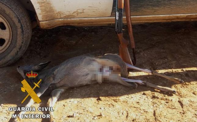 El Seprona sorprende a un cazador abatiendo un corzo en época de veda