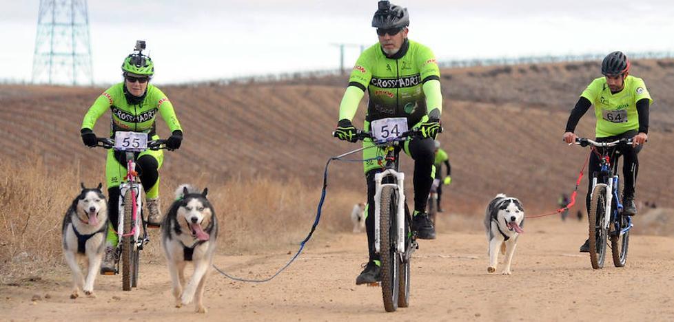 Los viñedos de La Seca, escenario de las carreras con perros