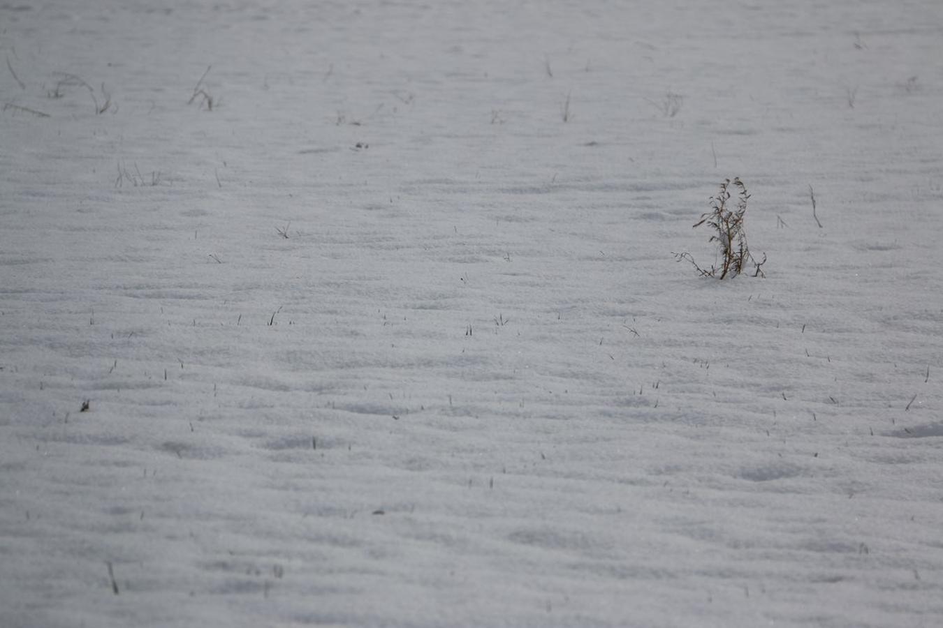 La nieve se hace notar en el alfoz