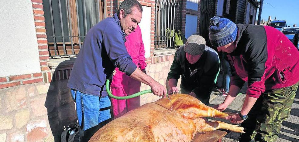 Los vecinos de Villaverde de Íscar celebran el sábado su fiesta en torno a la matanza del cerdo