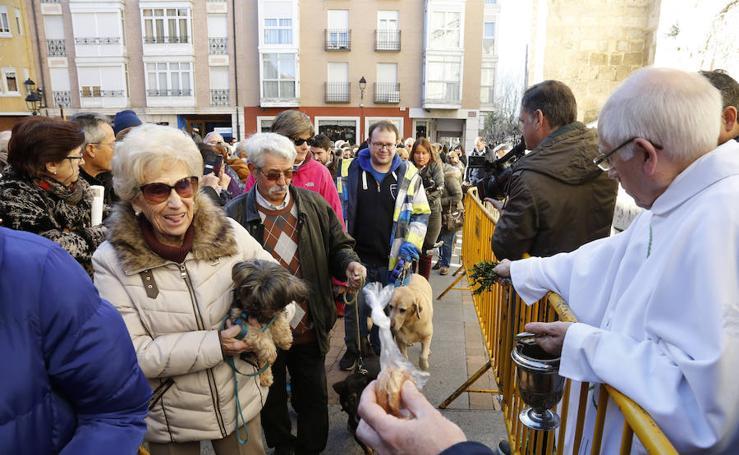 Palencia festeja a San Antón