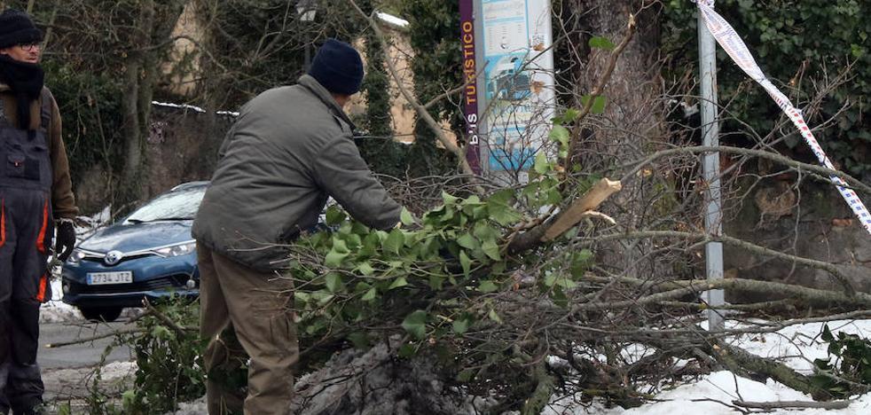 Los daños en el arbolado de Segovia por la nieve son «inmensos»