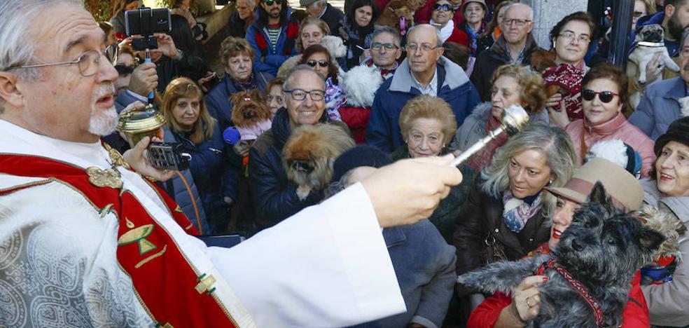 Por San Antón, agua bendita para las pequeñas mascotas