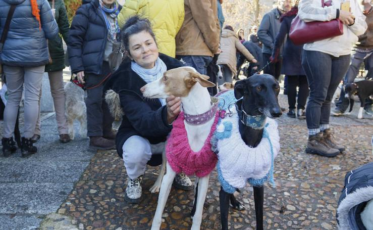 Bendición de animales por San Antón en Salamanca