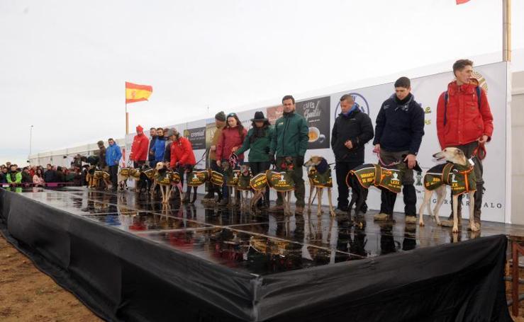 Arranca el campeonato Nacional de Galgos en Madrigal de las Altas Torres