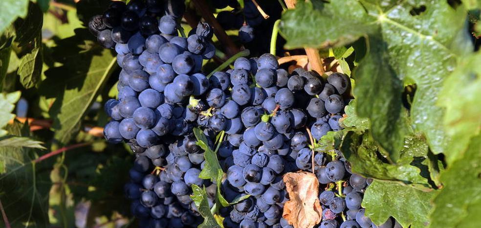 Carlos Moro presenta en Madrid Fusión su primer vino de la DO Ribeiro, Finca San Cibrao