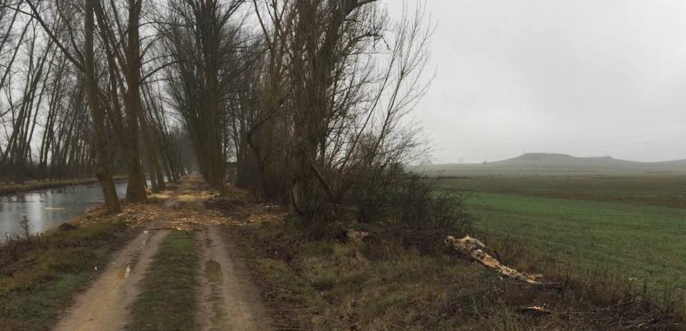 La CHD plantará 1.500 árboles autóctonos para reforestar un tramo del Canal de Castilla