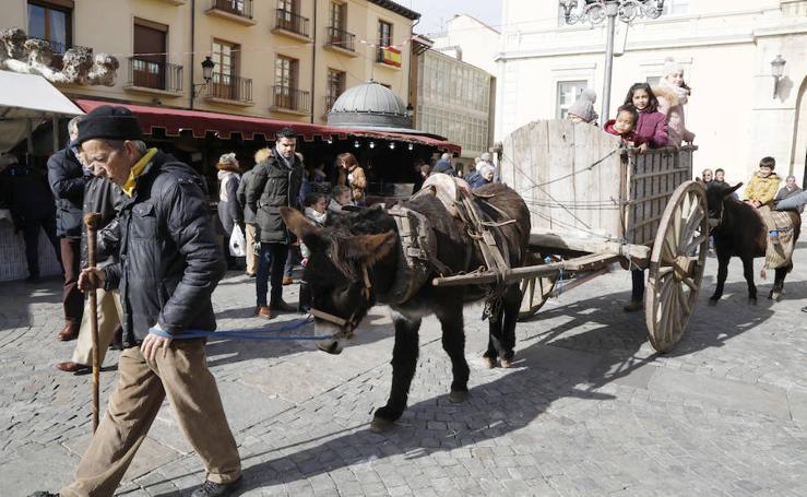 Palencia vive su Mercado Tradicional de las Candelas