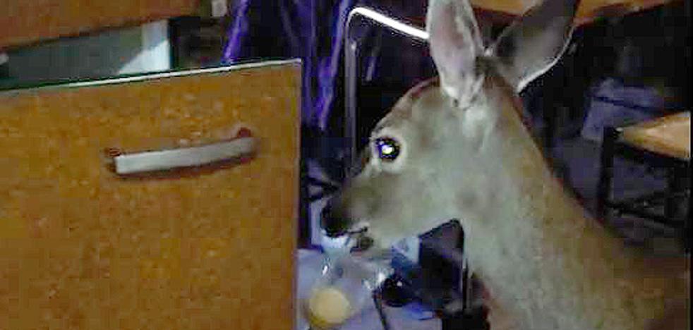'Fueron felices y comieron galletas', así acaba el cuento de Bambi en Palencia