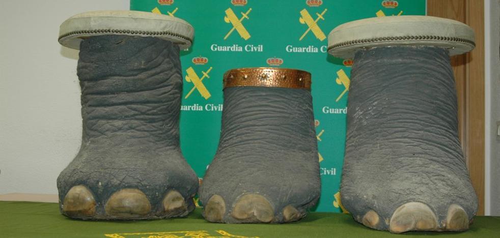 La Guardia Civil interviene en Toledo tres patas y un colmillo de elefante