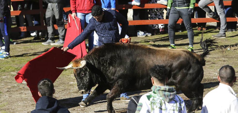 El aficionado puede con 'Jabalito', el Toro del Antruejo de Toros de Orive