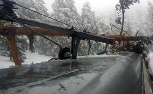 Un árbol cae sobre un tren de cercanías en Cotos