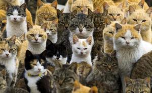Ayuntamiento, Soria Adopción y Colegio de Veterinarios controlarán la colonia de gatos callejeros