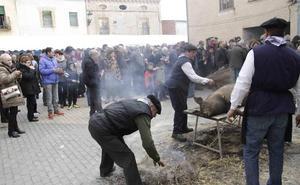 La provincia de Valladolid se va de matanza este fin de semana