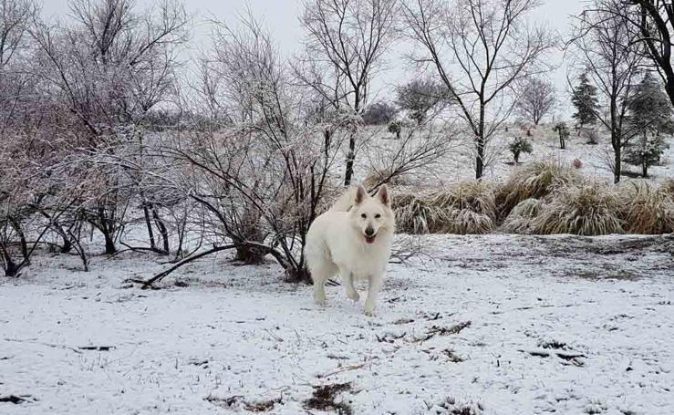 Las fotos de la nieve enviadas por los lectores de El Norte de Castilla