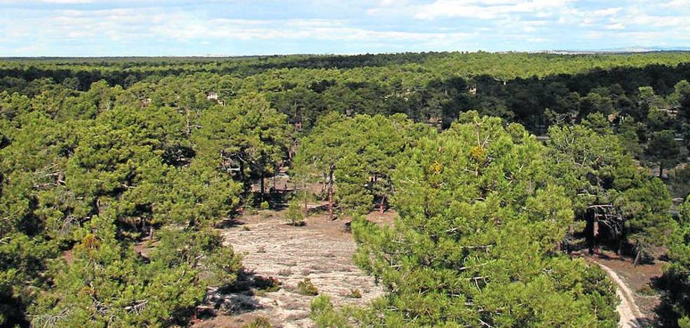 Aumenta un 75% la recaudación en las subastas de madera en Cuéllar