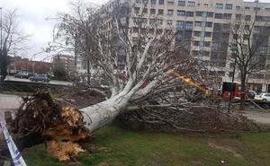 Un joven, herido en Valladolid por un árbol derribado por el viento