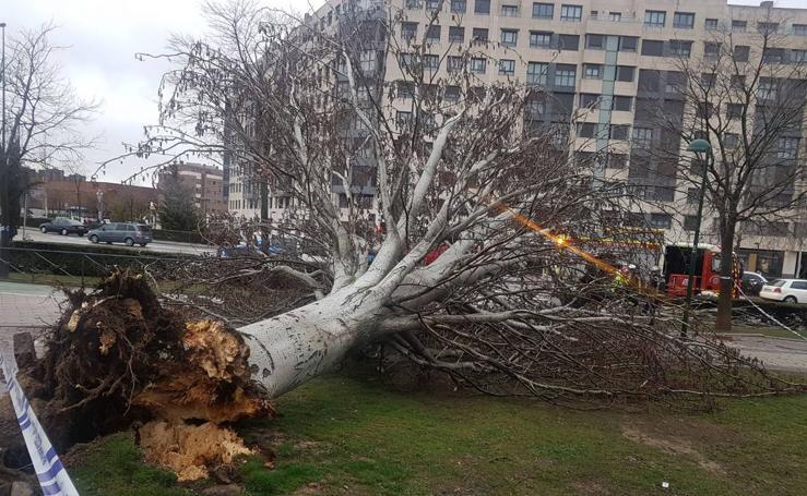 La lluvia y el viento causan estragos en Valladolid