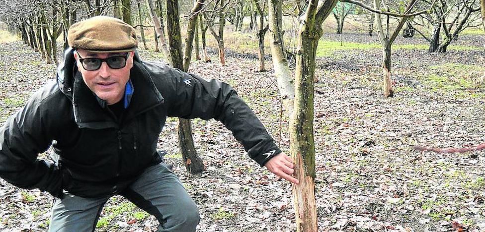 Los agricultores se quejan por la plaga de conejos