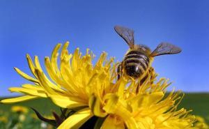 La alergia al polen será más intensa esta primavera