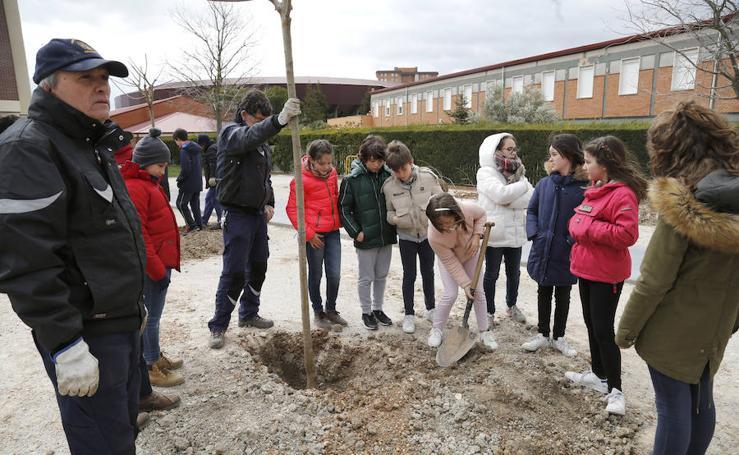 Plantación de arboles en la avda Derechos Humanos